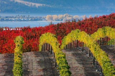Vineyards near Chelan